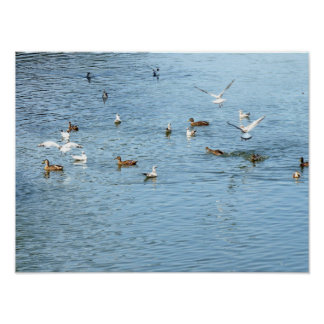 Birds On Summer River Poster