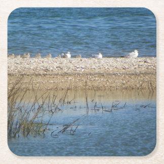 Birds on the Matanzas Coaster
