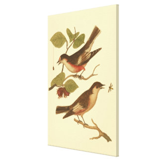Birds Perched on Branches Eating Insects Canvas Print
