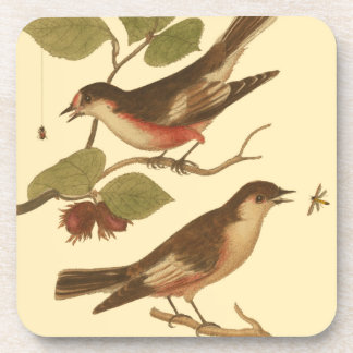 Birds Perched on Branches Eating Insects Drink Coasters