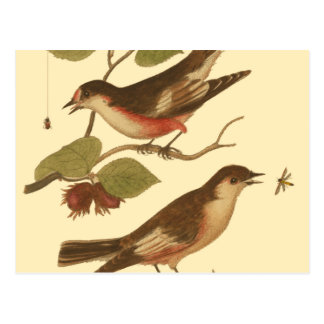 Birds Perched on Branches Eating Insects Postcard