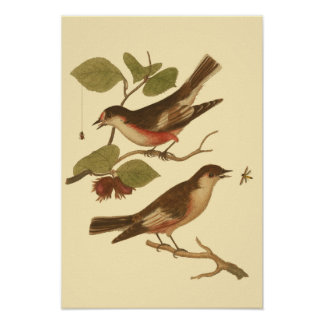 Birds Perched on Branches Eating Insects Poster