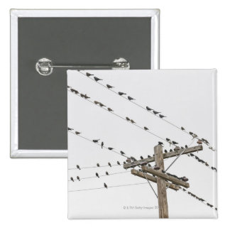Birds perched on wires 15 cm square badge