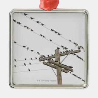 Birds perched on wires christmas ornament