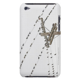 Birds perched on wires iPod touch cases