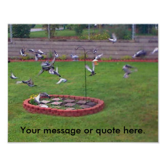 Birds Pigeons Flying Yard Your Text Posters