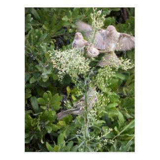 Birds & Plants Postcard