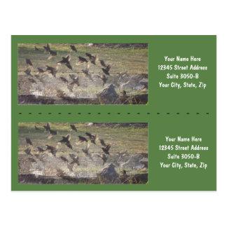 Birds Rising Bookmarkers - Customize! Postcard