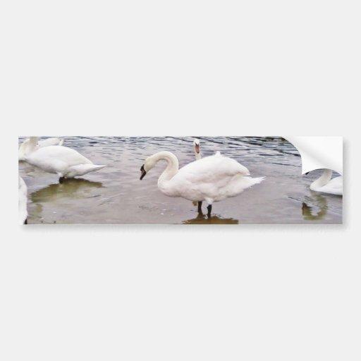 Birds Swans In Tikvara Lake Bumper Sticker