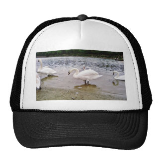 Birds Swans In Tikvara Lake Cap