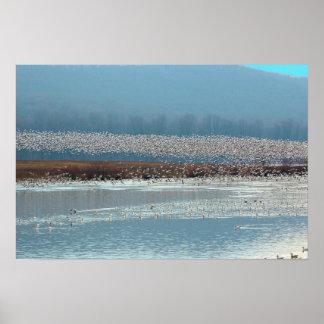 Birds Take Flight - poster