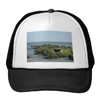 Birds view cap