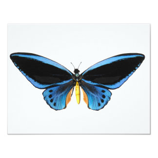 Birdwing Butterfly 11 Cm X 14 Cm Invitation Card