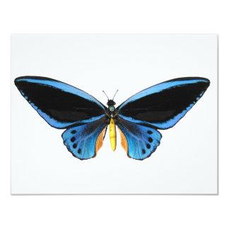 Birdwing Butterfly 11 Cm X 14 Cm Invitation Card