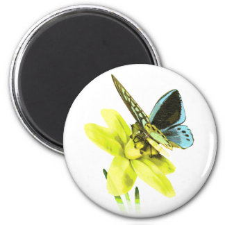 Birdwing Butterfly and Daffodil 6 Cm Round Magnet