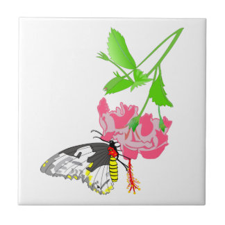 Birdwing Butterfly Small Square Tile