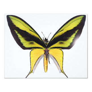 BirdWingX Butterfly 11 Cm X 14 Cm Invitation Card