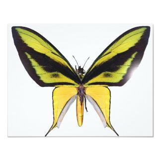 BirdWingX Butterfly 11 Cm X 14 Cm Invitation Card