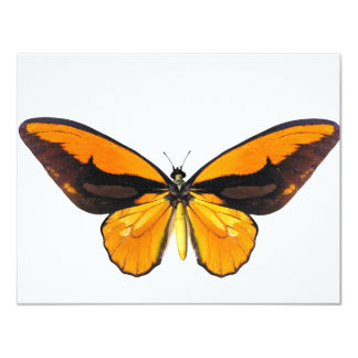 BirdWingY Butterfly 11 Cm X 14 Cm Invitation Card