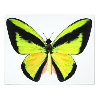 BirdWingZ Butterfly 11 Cm X 14 Cm Invitation Card