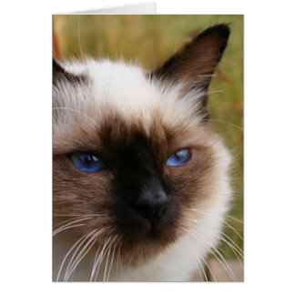 birman.png card