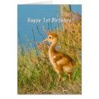 Birthday, 1st, Baby Sandhill Crane Card