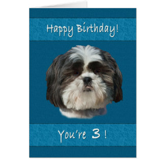 Birthday, 3rd, Shih Tzu Dog Card