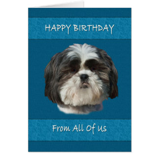 Birthday,  All of Us , Shih Tzu Dog Card