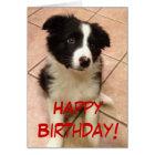 Birthday Border Collie Puppy Greeting Card