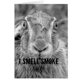 birthday card humor bunny black and white photo