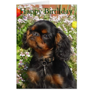 Birthday card : King charles spaniel / english toy