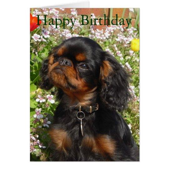Birthday card : King charles spaniel / english
