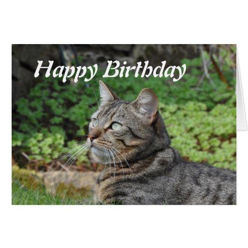 Birthday Card: Minnie the Cat