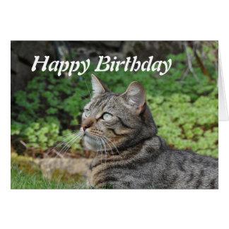 Birthday Card: Minnie the Cat Greeting Card