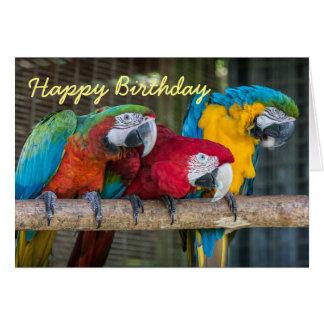 Birthday card three Macaw parrots