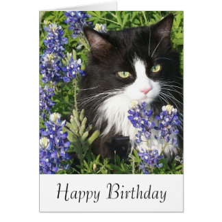 Birthday Card Tuxedo Cat in Texas Bluebonnets