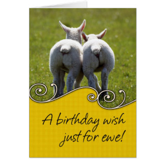 Birthday Card - Two Baby Lambs