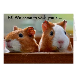 Birthday Card: Two Guinea Pigs