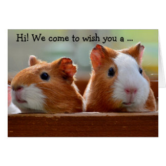 Birthday Card: Two Guinea Pigs Greeting Card