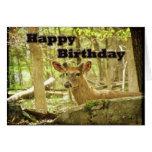 Birthday Card - Whitetail Deer Buck in Velvet