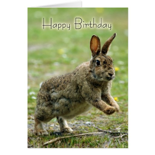 Birthday Card With Wild Rabbit