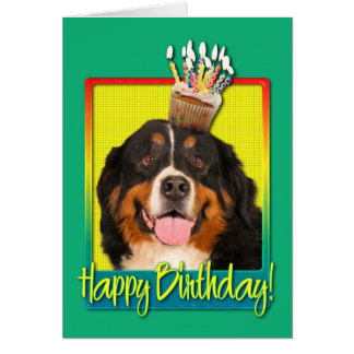 Birthday Cupcake - Bernese Mountain Dog Card