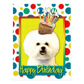 Birthday Cupcake - Bichon Frise Postcard