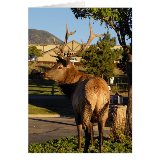 Birthday elk takes a moment card