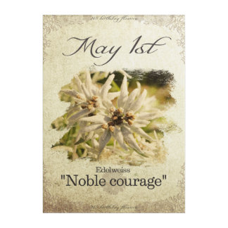 """Birthday flowers on May 1st """"Edelweiss"""" Acrylic Wall Art"""