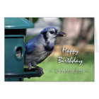 Birthday for Granddaughter, Blue Jay at Feeder Card