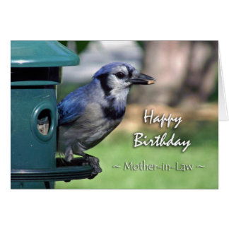 Birthday for Mother-in-Law, Blue Jay at Feeder Greeting Card