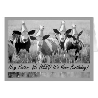 Birthday for Sister Funny Cows Greeting Card