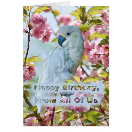 Birthday, From All of Us, White Parrot Card