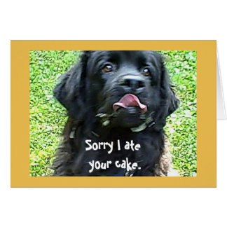 Birthday greeting ~ Newfoundland Dog Card